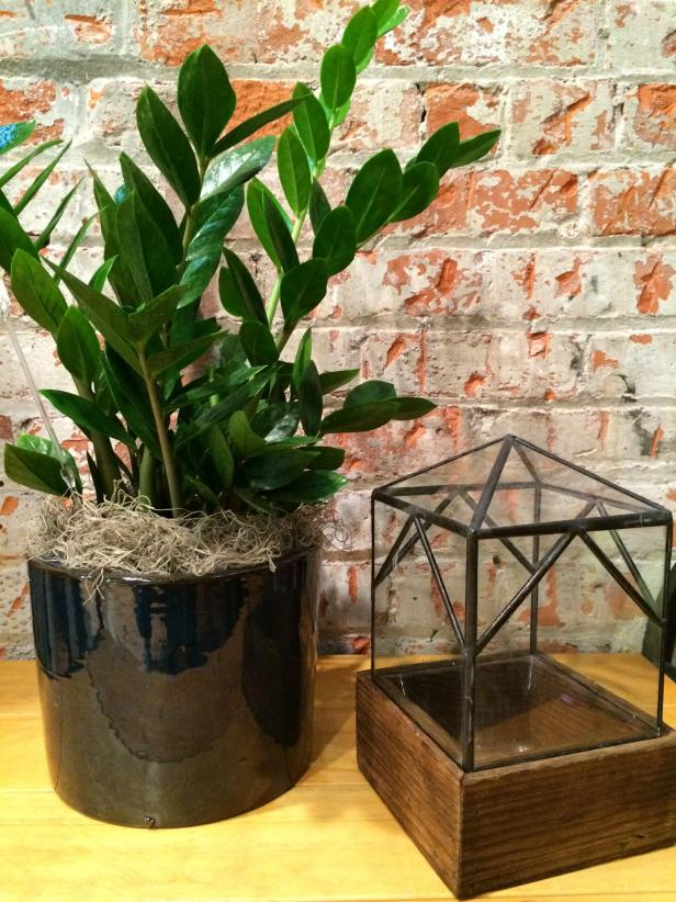 Houseplant on Table in Front of Brick Wall