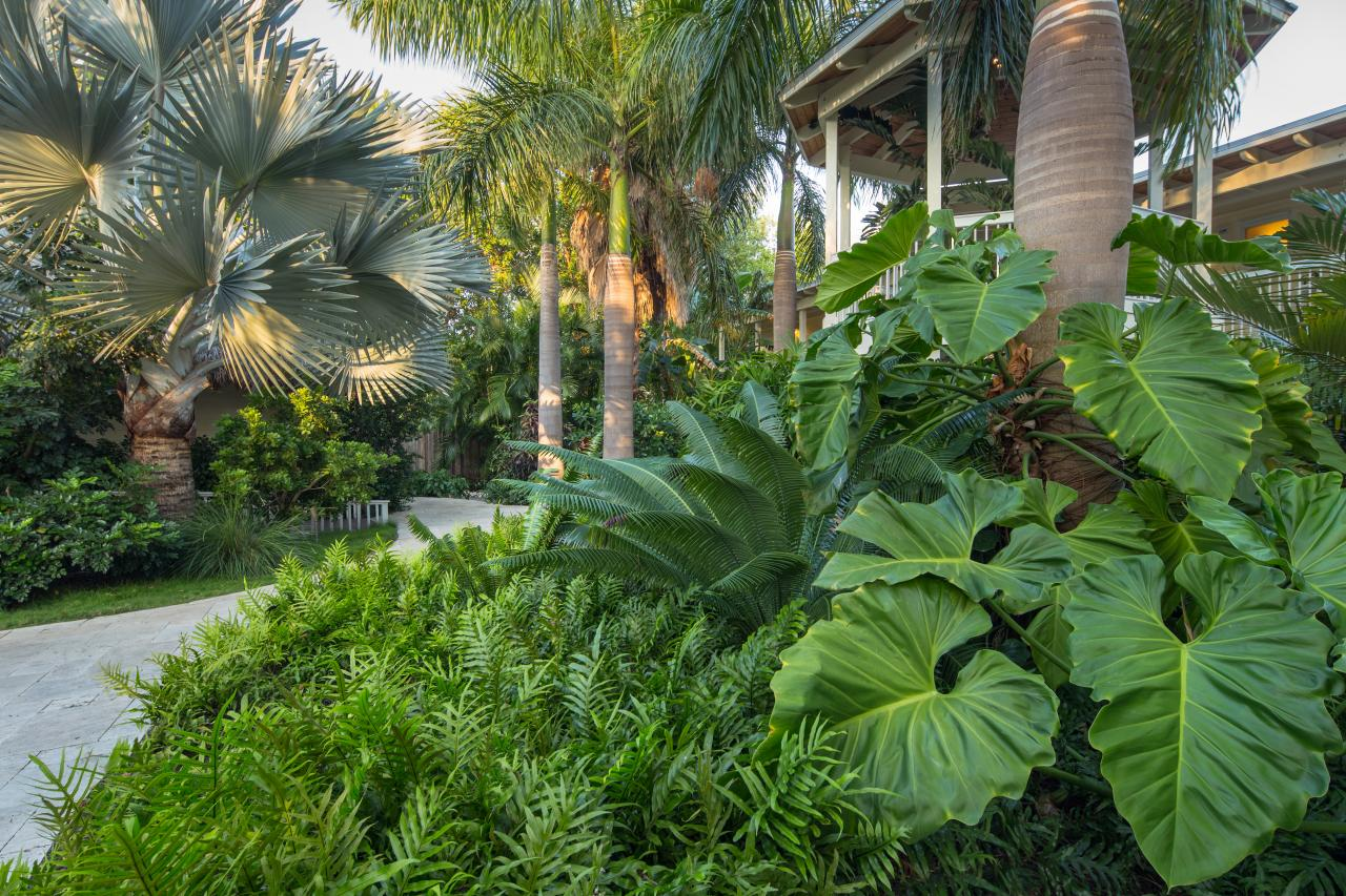 Design a tropical garden hgtv for Tropical landscape