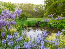 Cottage Garden Pond Framed by Lilacs