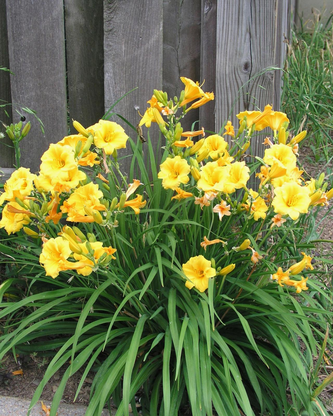 A Guide To Annuals Versus Perennials Hgtv