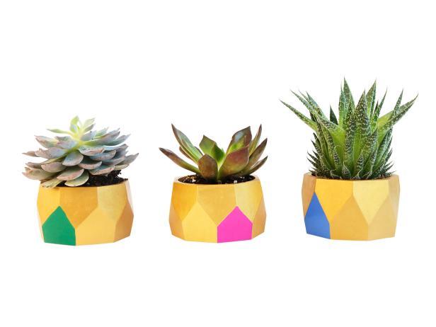 Blogger DIY Bracelet Planters