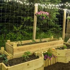 Raised Bed Garden and String Lights