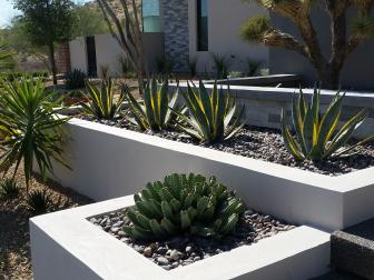 Front Landscape Features Agave and Euphorbia