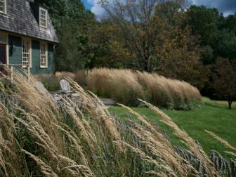 Ornamental Grass and Lawn