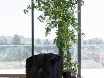Houseplant Adds Greenery, Accentuates Tall Ceilings