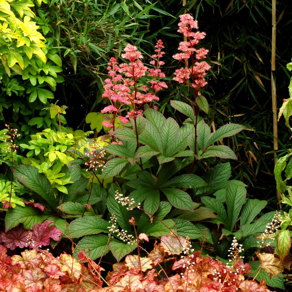 House Plants For Shady Rooms: Shade Garden Ideas