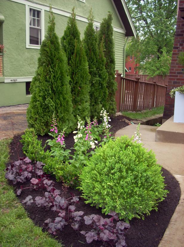Evergreen borders for landscaping hgtv for Plants for landscaping around house