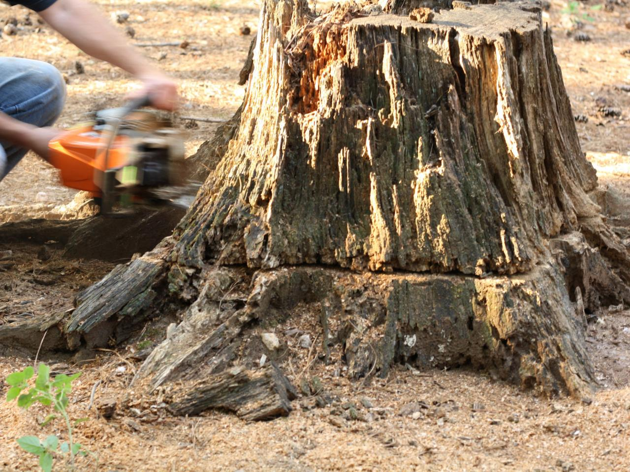 Stump Removal: Do It Yourself | HGTV