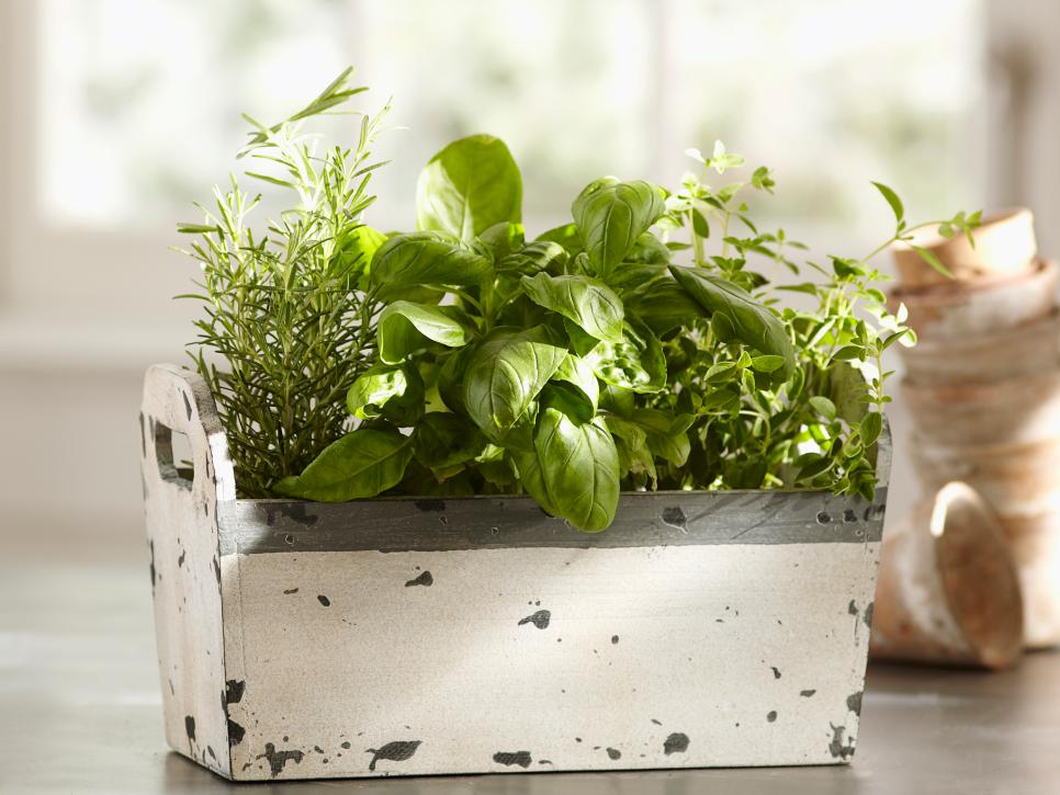 Indoor Outdoor Gardener Indoor herb garden kits to grow herbs indoors hgtv workwithnaturefo