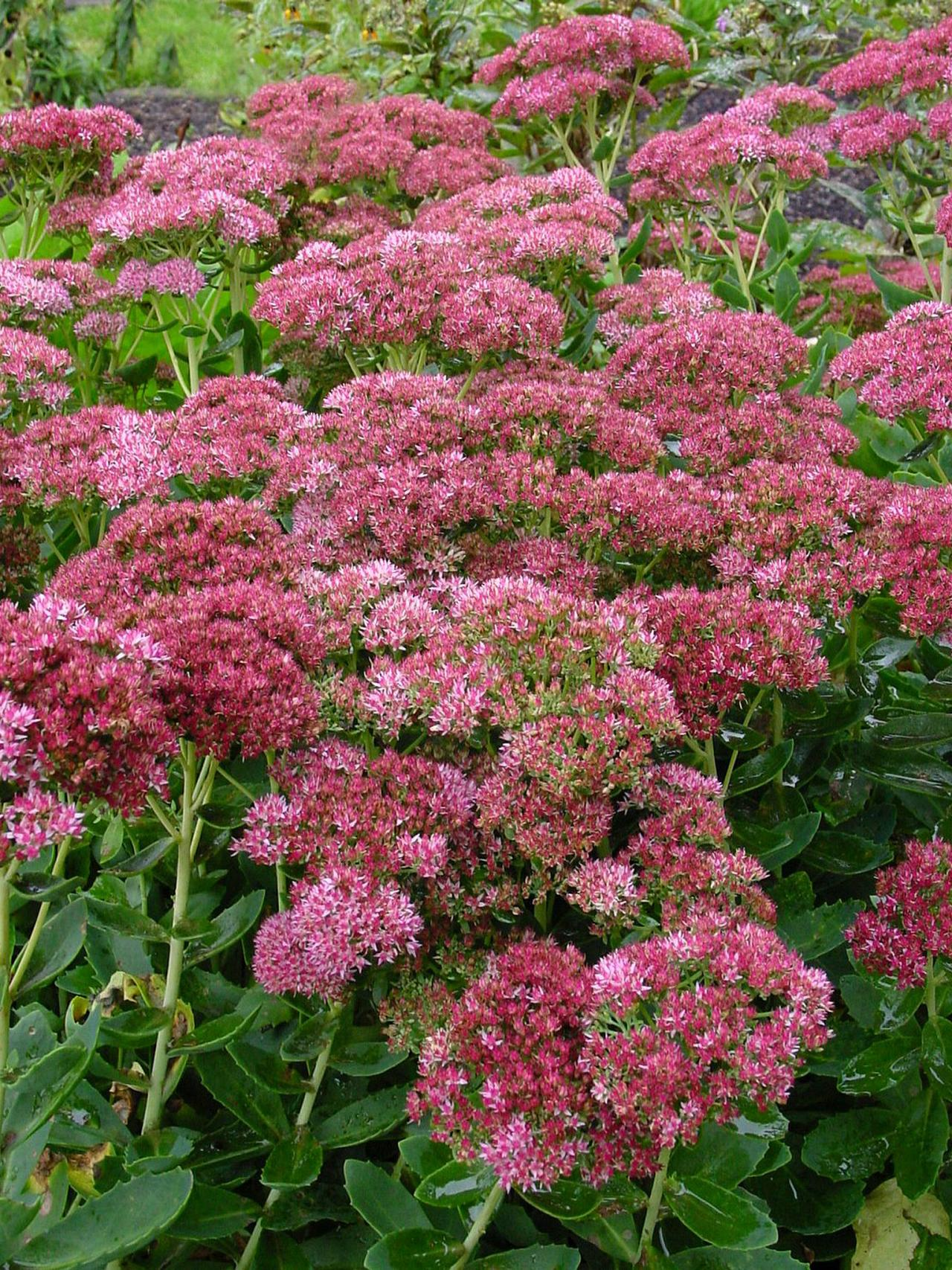 Pick Up Some Perennials That Pop Hgtv