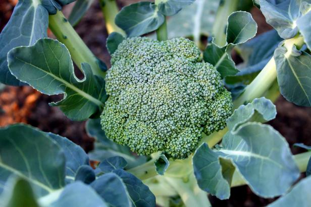 Broccoli has a beauty all its own.