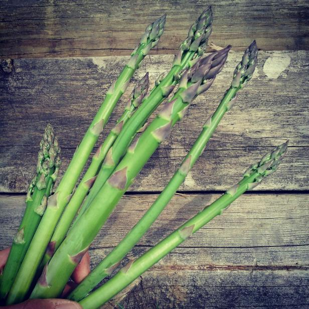 asparagus' 1st pick of the season
