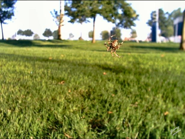 As a pest deterrent in the garden, spiders are arachno-fabulous.