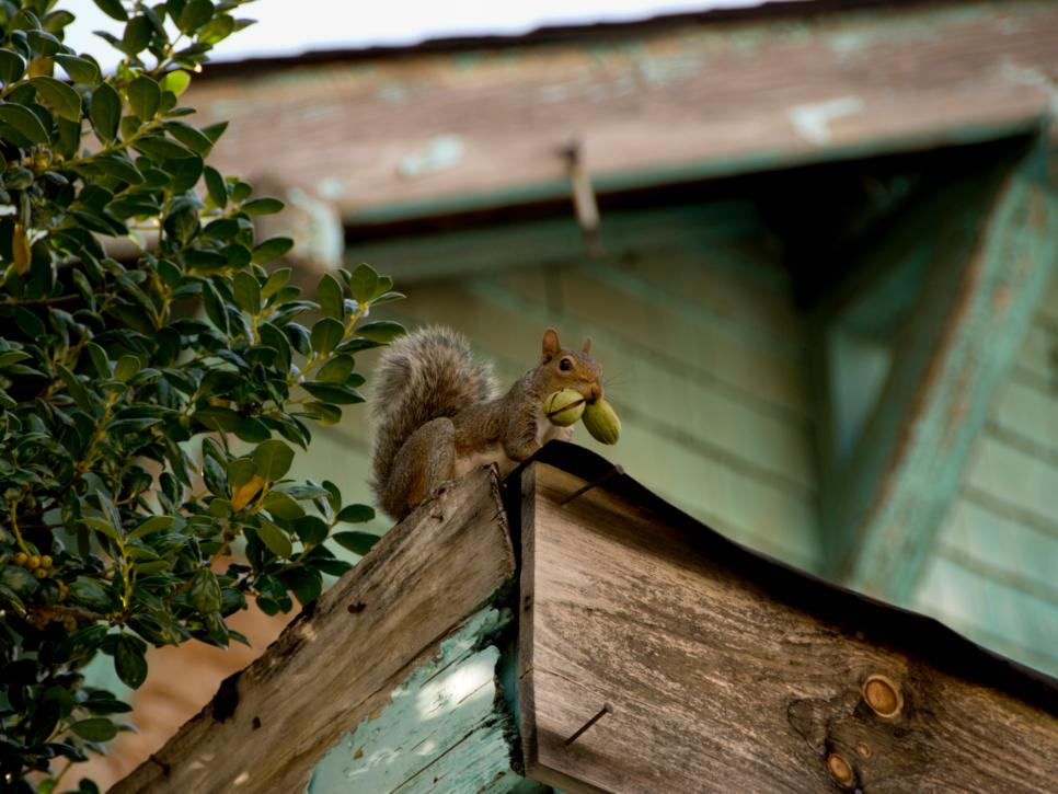 A Gallery Of Squirrels Doing Things They Shouldn T Hgtv