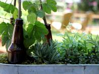 Try Your Hand at Planting a Beer Garden