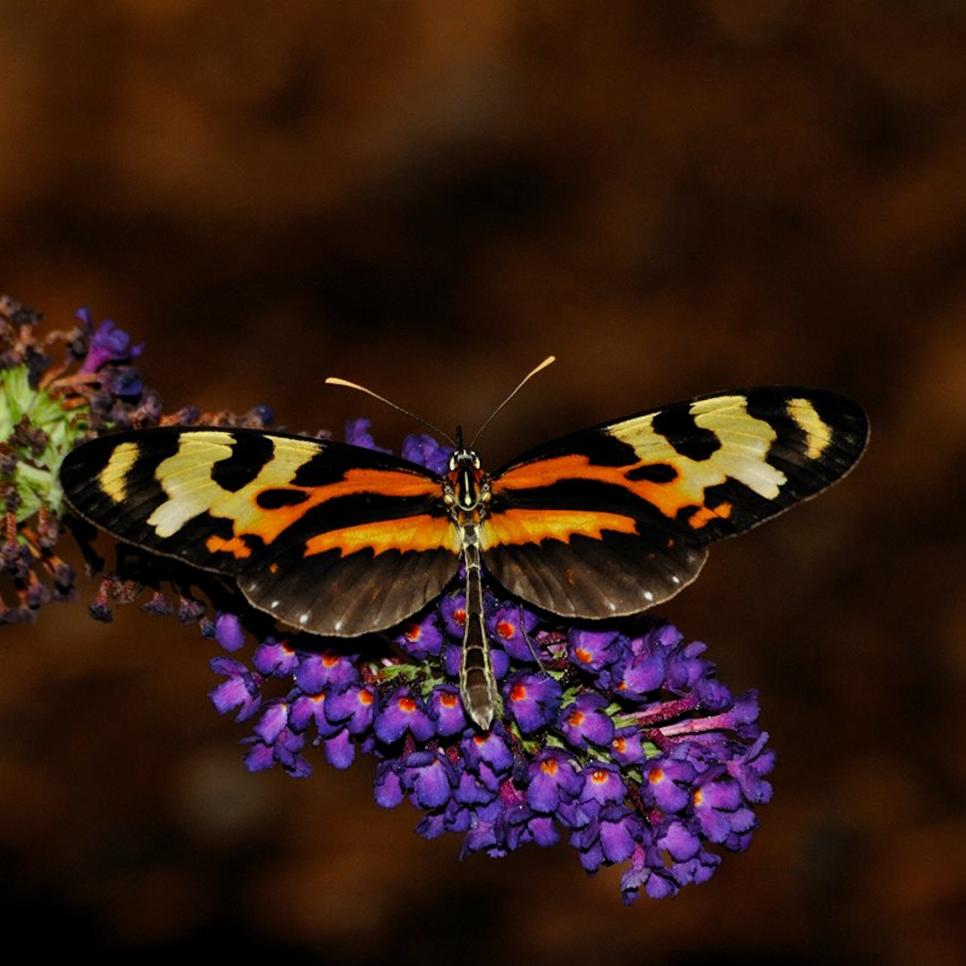 Exotic Tropical Butterflies   HGTV