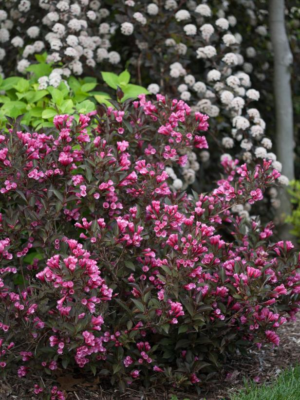 14 flowering shrubs for sun hgtv for Best low maintenance plants for shade