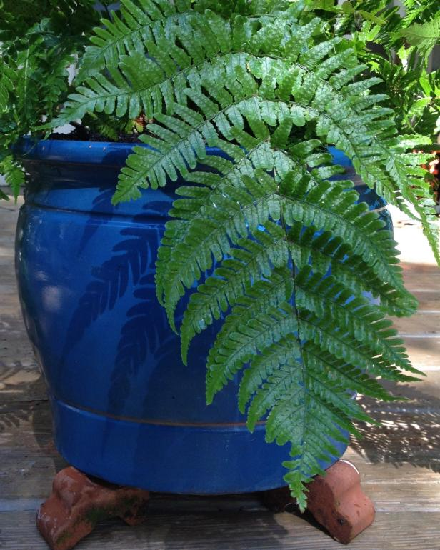 fern on pot feet