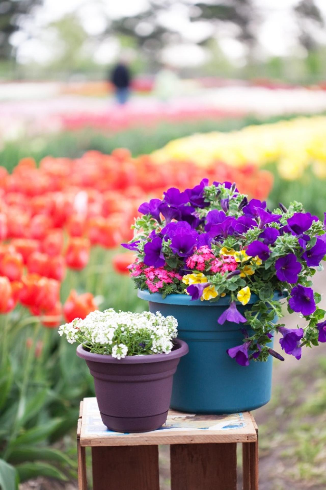 Garden design on the cheap 50 and under hgtv garden color izmirmasajfo Image collections