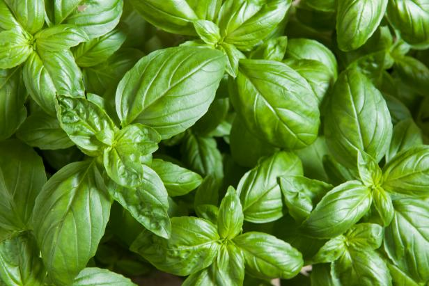 Johnny's Selected Seeds 'Eleonora' basil