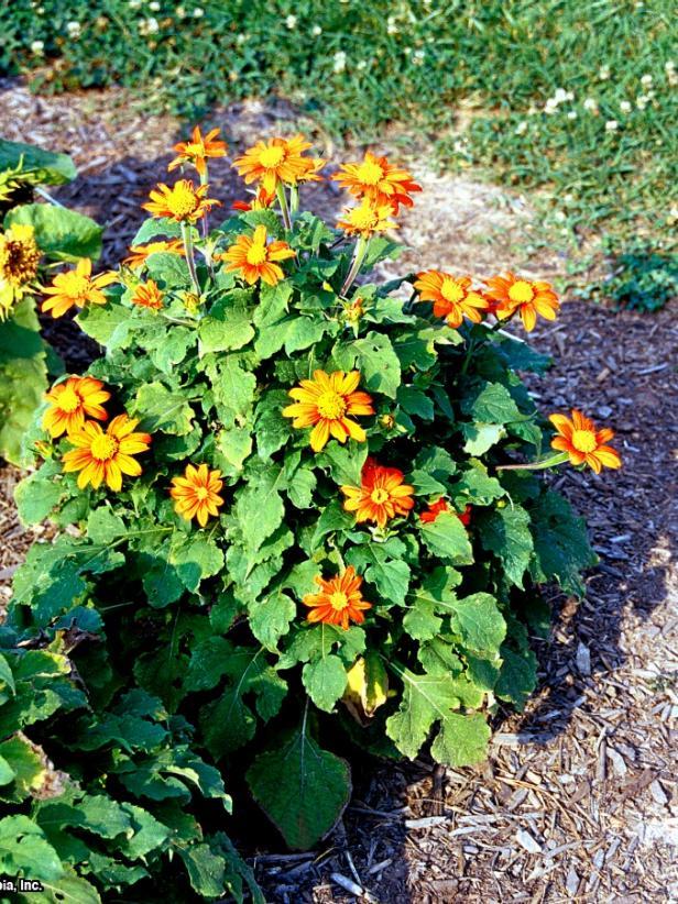 White Flower Perennials Full Sun: 15 Plants To Attract Hummingbirds
