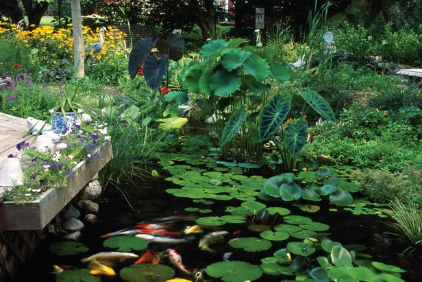 Plants for ponds and water gardens hgtv for How to water a garden
