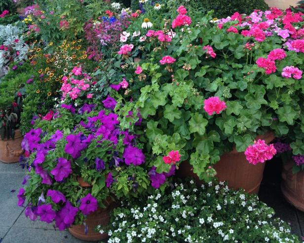How To Choose, Plant And Grow Annuals