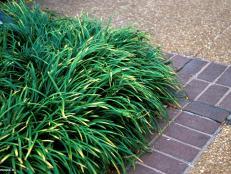 Dwarf Ornamental Grasses 8 stunning ornamental grasses hgtv invasive ornamental grasses workwithnaturefo