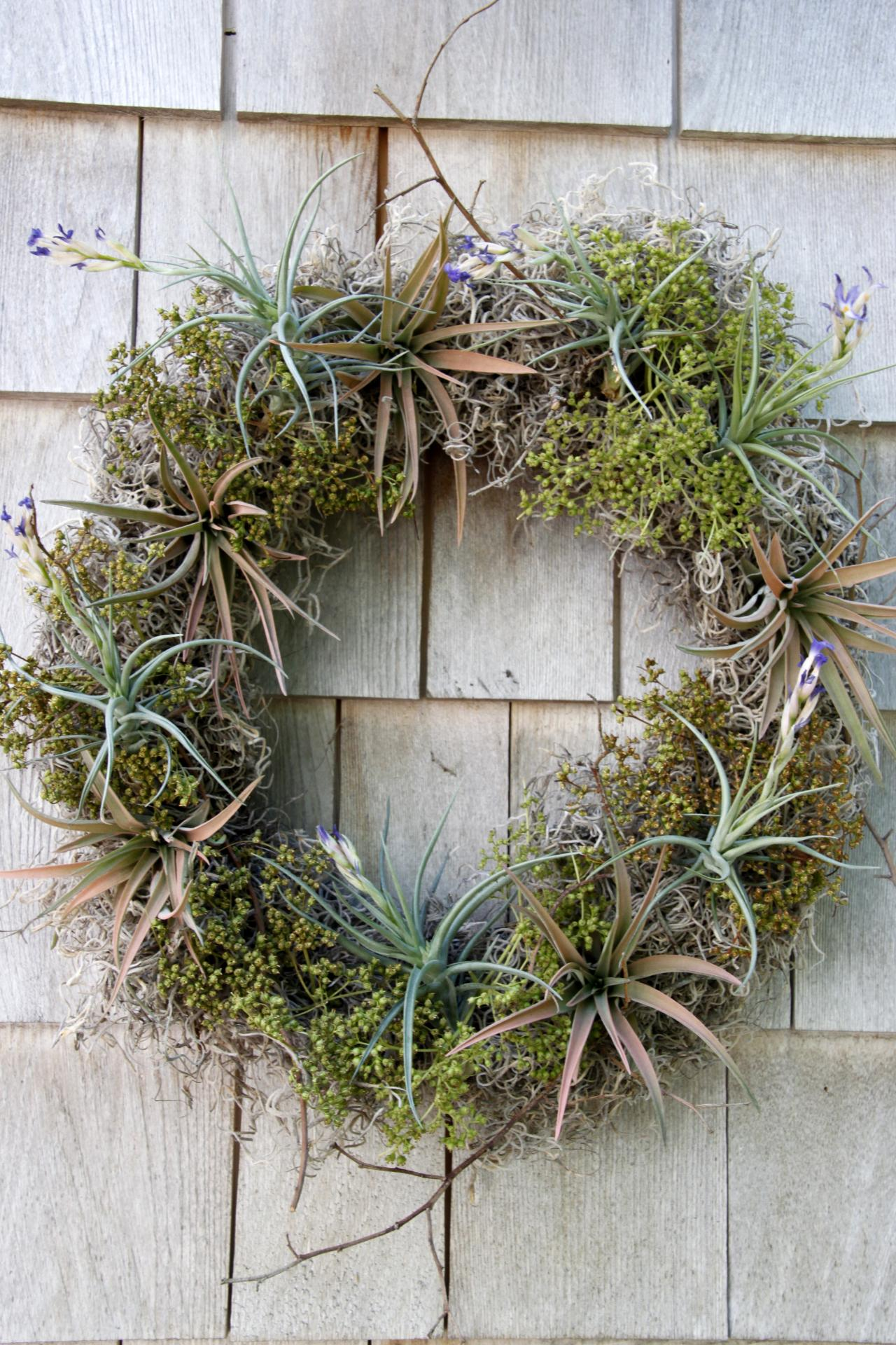 Diy Airplant Wreath Hgtv
