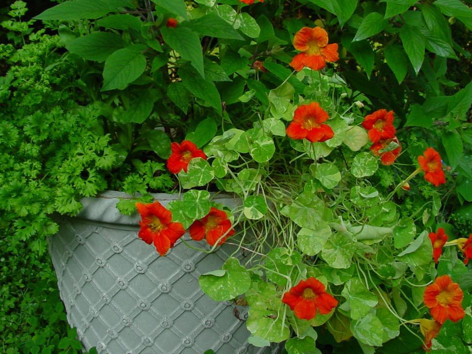 Raised Bed Edible Garden