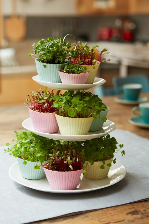 Microgreens Growing in Cupcake Liners
