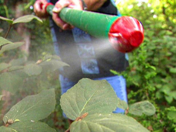 Effective Fungicides | HGTV