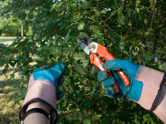 iStock_3620100_Pruning_s4x3