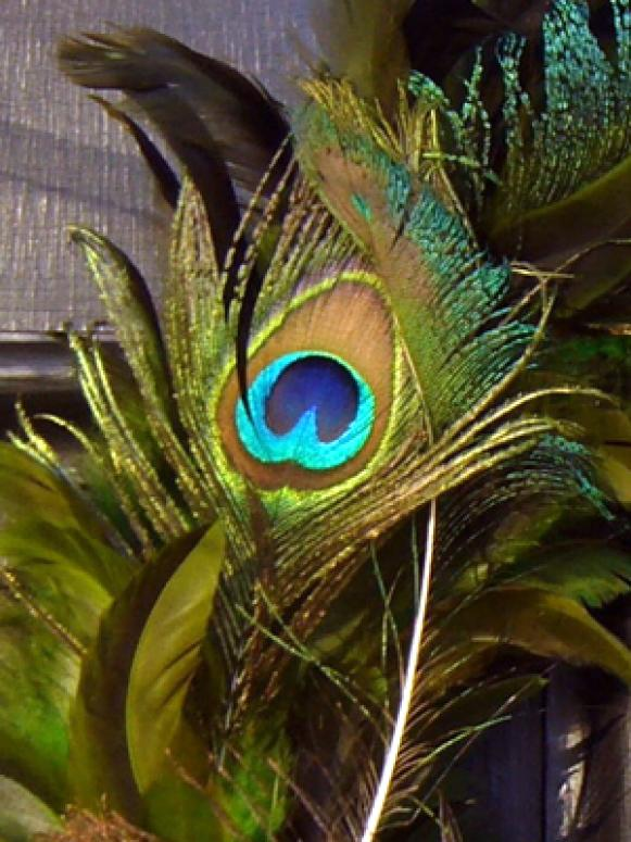 Peacock Feather Eye Detail