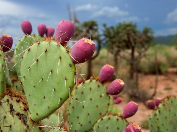 Images Of Prickly Pear Fruit