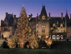 Biltmore House Facade at Night With Illuminated Christmas Trees