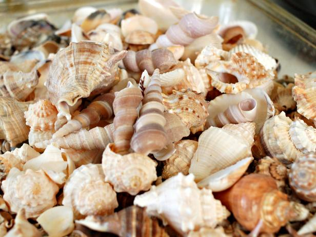 Shell Pile