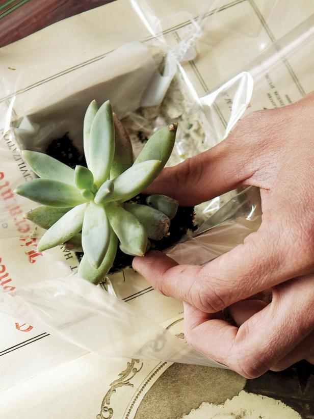 Inserting the succulent plant into a vintage book planter.