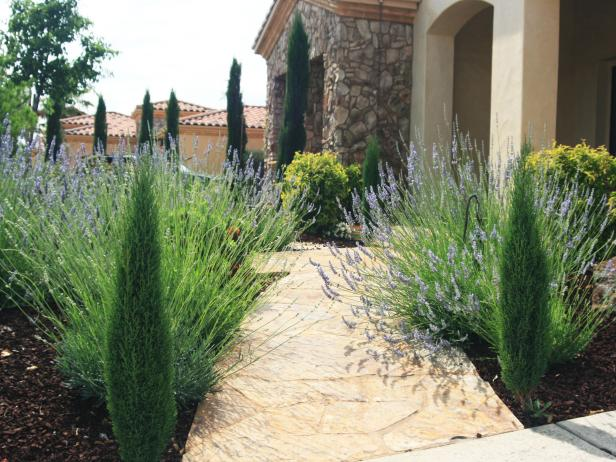 Tuscan Entryway With Lavender and Cypresses
