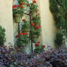 Red Geraniums in Alcove