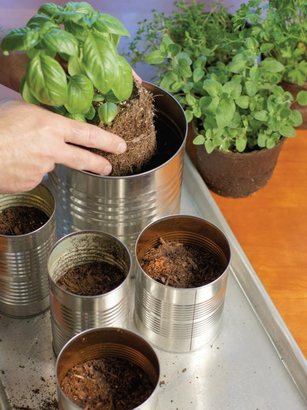 Add both basil plants to the largest can, then plant the remaining herbs in the other four cans. Fill in around each plant with more potting soil if necessary.