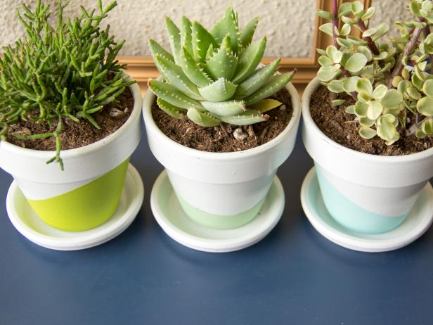 Three Potted Succulents In Neon & White Pots