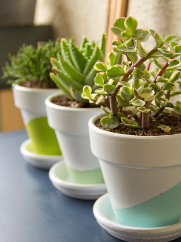 Potted succulents are a great giveaway at summer weddings and they're hearty, so guests will have a long-lasting reminder of your celebration. Extra credit: Customize the pots with paint like Chelsea Costa of <a target=&quot;blank&quot; href=&quot;http://www.hgtv.com/entertaining/diy-wedding-favors/pictures/index.html&quot;>Lovely Indeed</a> did here. If you use your wedding colors, these can double as centerpieces during the reception!