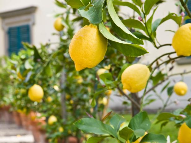 HGTV_gardens_freezing_can_you_freeze_lemon_s4x3