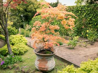 Container-Planted Japanese Maple in Traditional Terraced Garden