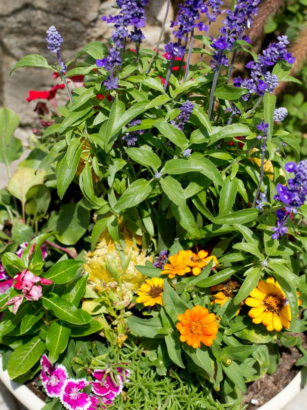 Container garden of flowers