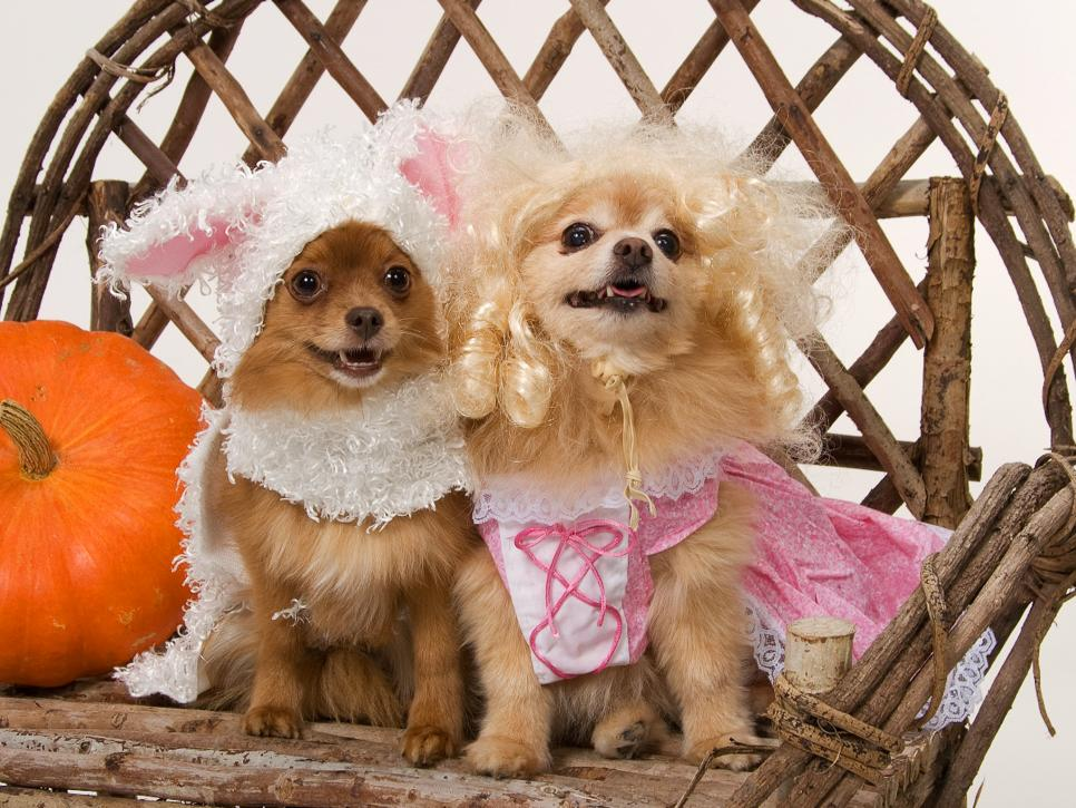 Sewing for Pets: Pet Halloween Costume
