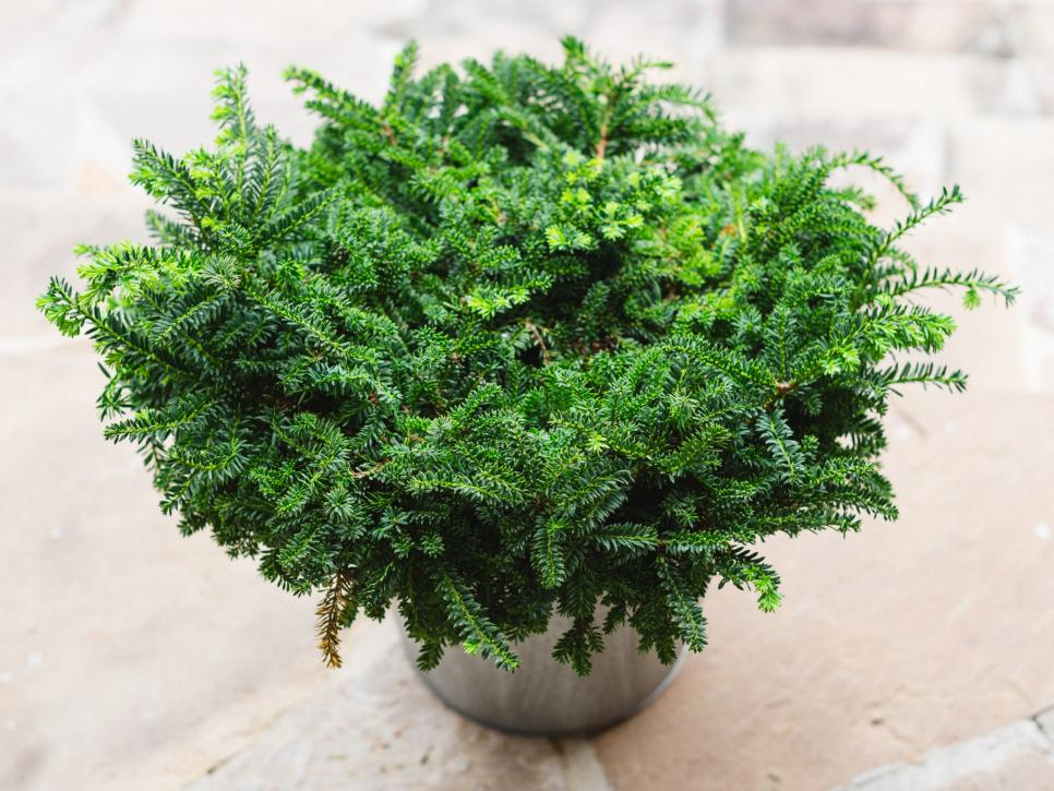 Winter friendly patio plants hgtv for Great small trees for landscaping