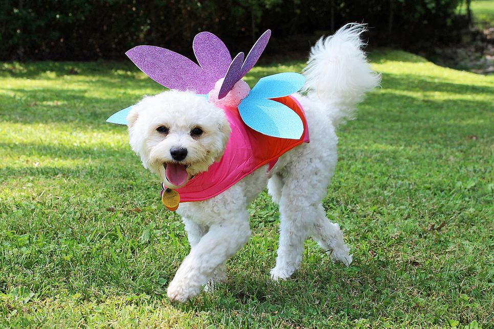 19 diy pet costumes for halloween hgtv photo by h camille smith solutioingenieria Image collections