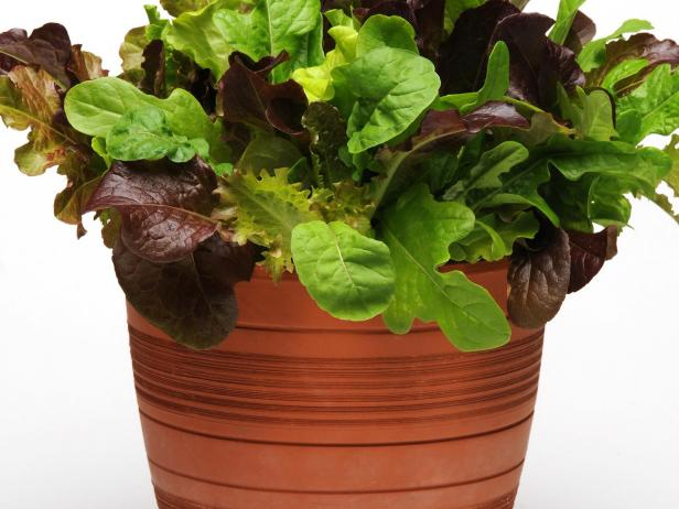 'Simply Salad City Garden' Baby Greens Mix